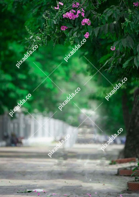 Tree Blur New Picsart Photo Editing Background