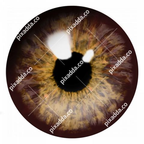 brown eye png transparent image
