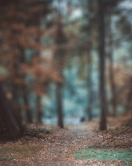 Forest Blur Picsart Photo Editing Background