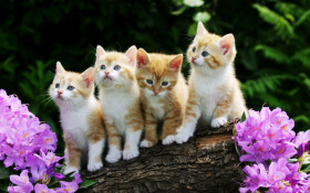 four kittens on a log wide