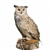 owl png transparent background