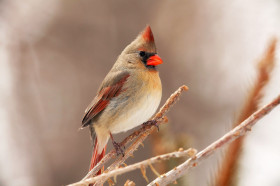 small bird with red beak other