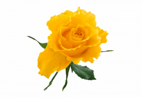 transparent yellow flower png